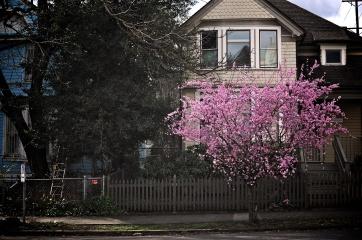 Portland Feb 2015 21